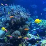 海の総合ミュージアム「アクアワールド大洗水族館」ご紹介します