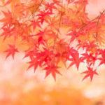 紅葉狩りシーズン到来!、茨城の紅葉スポット