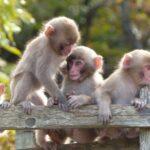 正月はSF映画の大傑作「猿の惑星」を堪能